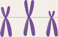 cromosomaxy_blog