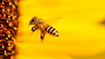 La fábula de las abejas de Bernard Mandeville